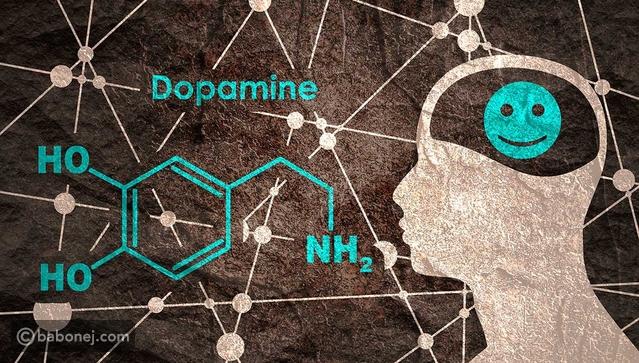 موقع بابونج هرمون الدوبامين Dopamine وظيفته وعلاج نقصه بالأعشاب