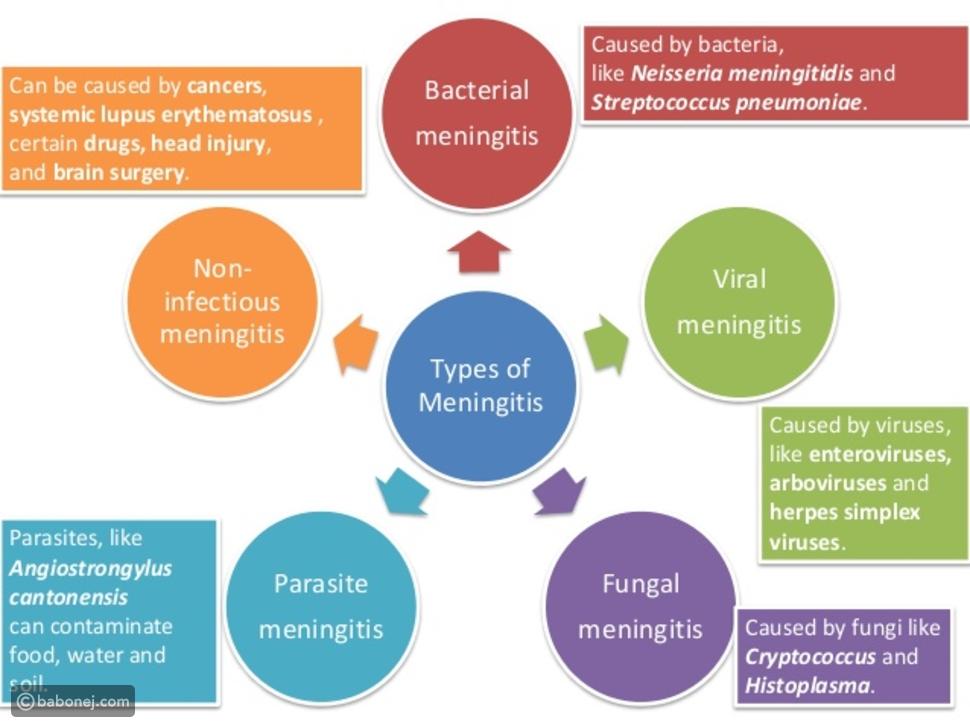 أنواع التهاب السحايا