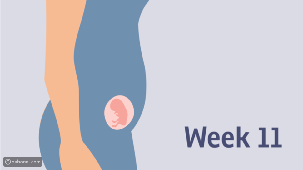 صورة الجنين في الأسبوع الحادي عشر