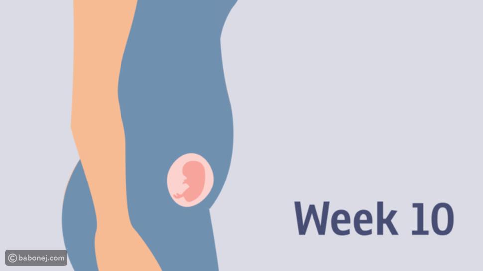 صورة الجنين في الأسبوع العاشر